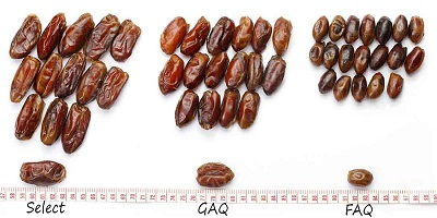 payvand sayer dates